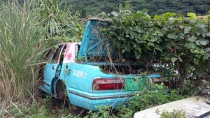 A wrecked blue taxi is overgrown by weeds