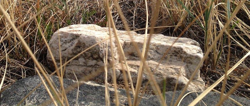 A white rock in the beach grass.