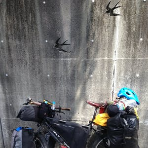 View enlargement of My bike leans against a wall engraved with birds.
