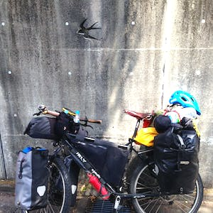 My bike leans against a wall engraved with birds.