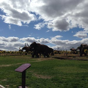 View enlargement of An outdoor park is filled with life-sized mammoth sculptures.