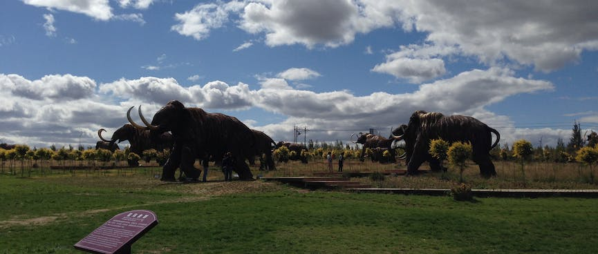 An outdoor park is filled with life-sized mammoth sculptures.