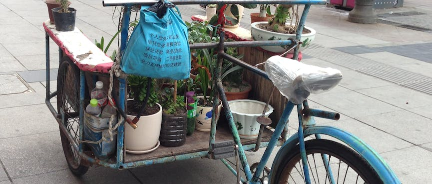 Small pot plants adorn a back-to-front tricycle.
