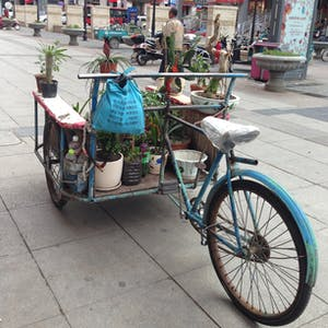 View enlargement of Small pot plants adorn a back-to-front tricycle.