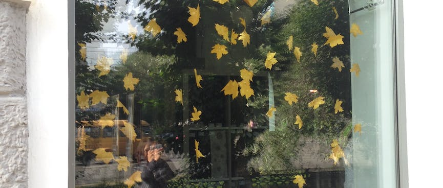 A window display of yellow leaves catches reflections of trees and Wanna with her camera, in Chita.