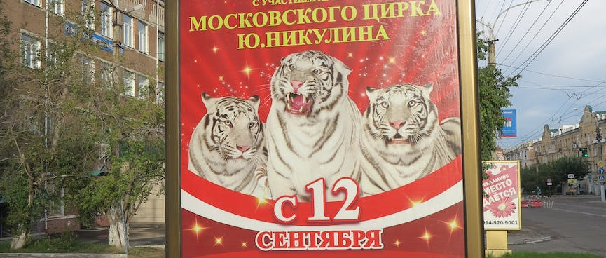 The middle of three white tigers roars from a red poster.