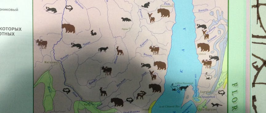 Brown animal icons pepper a map of Lake Irkutsk.