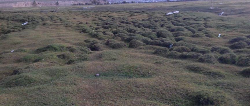 A lumpy green field.