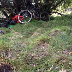 View enlargement of My bike leans against a tree, amid a lumpy grass lawn.