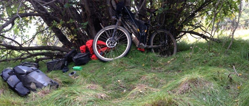 My bike leans against a tree, amid a lumpy grass lawn.