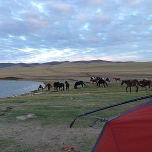 View enlargement of A small herd of horses graze behind my tent.