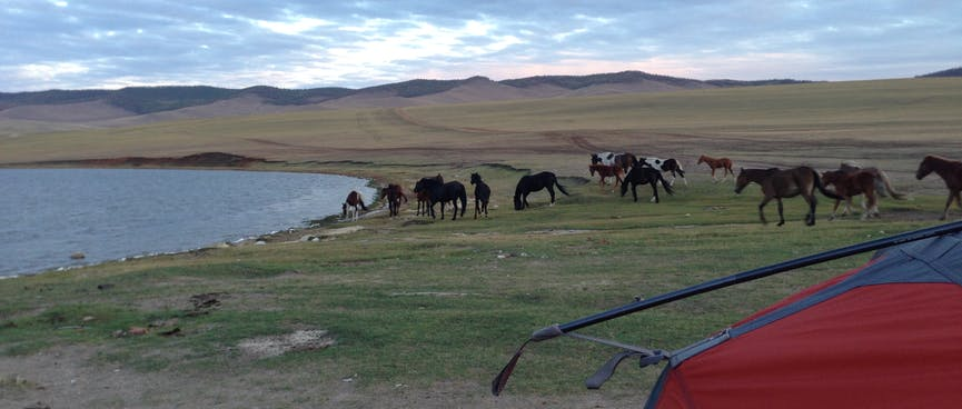 A small herd of horses graze behind my tent.