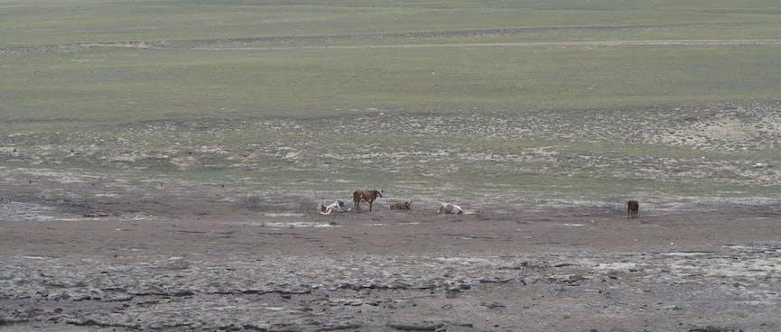 Cattle in a muddy field.