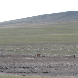 View enlargement of Cattle in a muddy field.