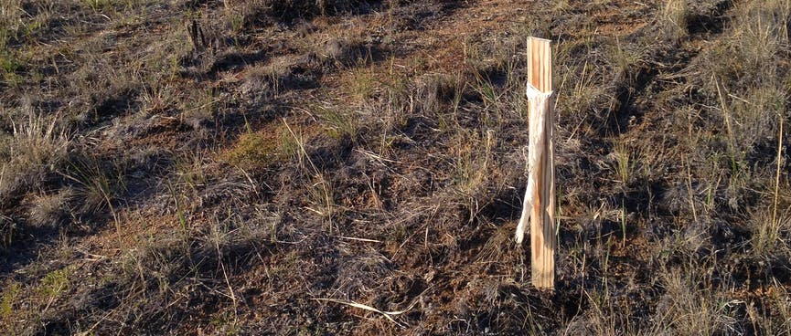 A wooden post marks the edge of the track.