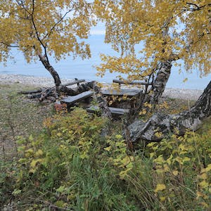 View enlargement of Seats under a yellow tree.