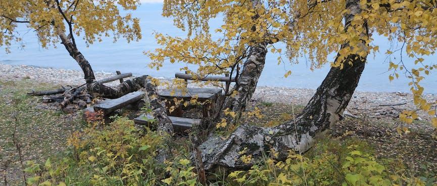 Seats under a yellow tree.