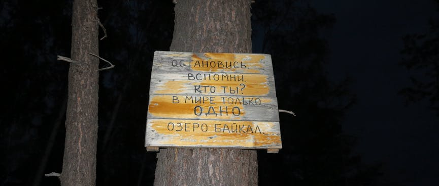 A homemade wooden sign is attached halfway up a tree trunk.