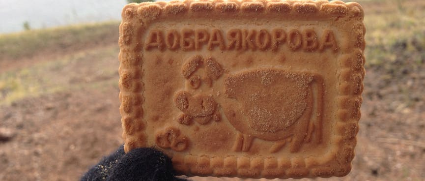 A rectangle biscuit with Cyrllic text and a picture of a cow.