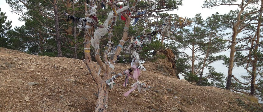 A denuded tree is adorned with colourful ties and a pile of coins.