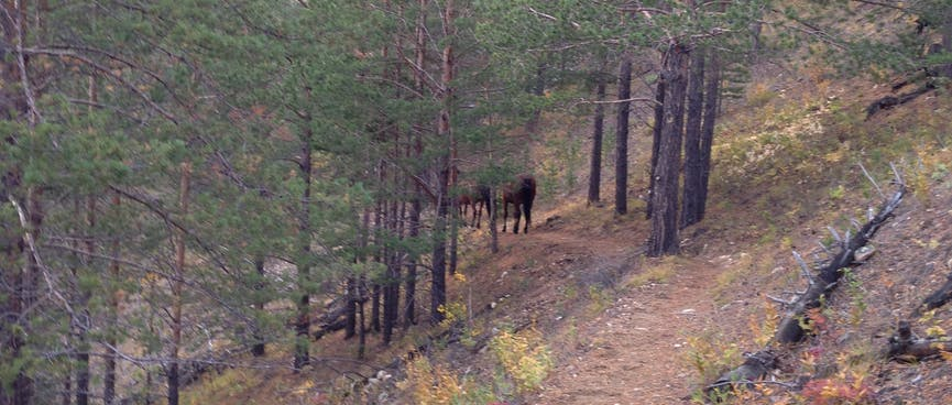 Several horses are visible through the trees.