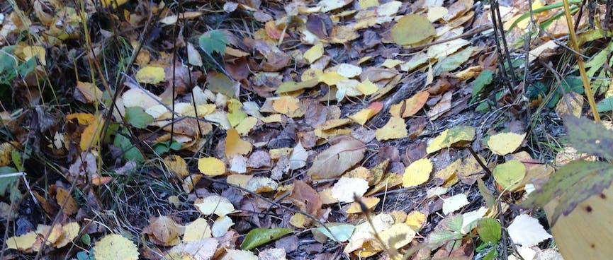 More lush leafy trails.
