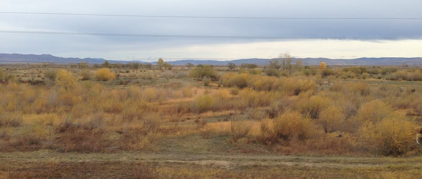 Brown grass and shrubs, and low mountains in the distance.