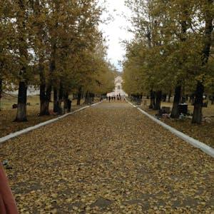 Tree lined boulevard.