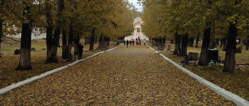 Leaves cover a tree lined path.