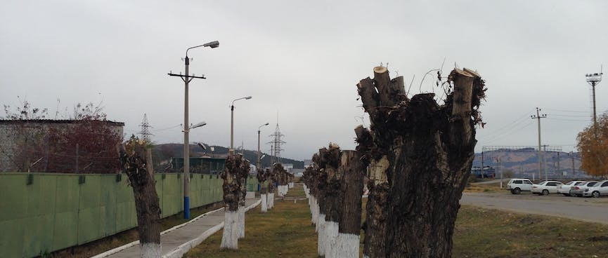 A line of stumps with white paint on the bottom third.