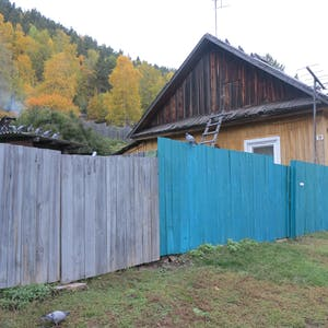 View enlargement of Pigeons next to a half-painted wooden fence.