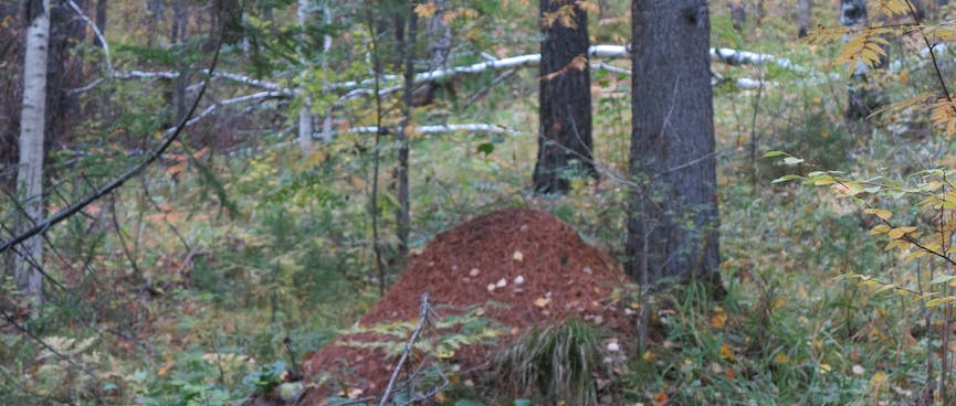 A mound of dirt amongst the trees.