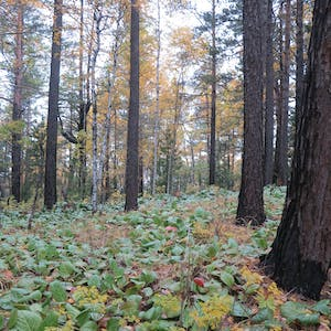 The surrounding forest is carpeted in small plants with green leaves.