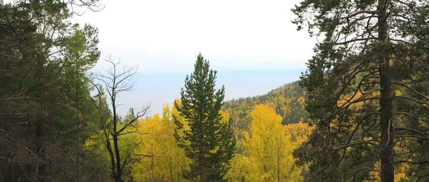 Forested mountains and the lake beyond them.