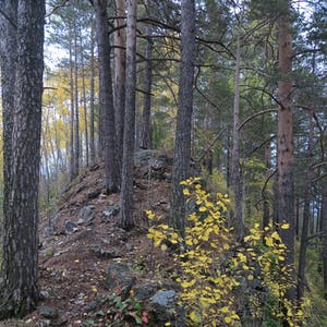 View enlargement of The trail runs up a forested ridge.