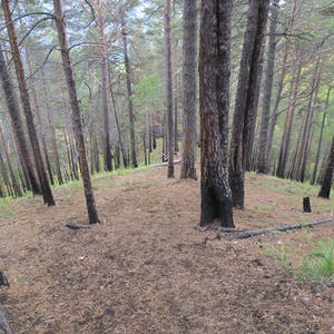The wide and steep descent through the trees.