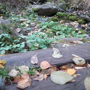 View enlargement of Leaves on evenly spaced wooden planks.