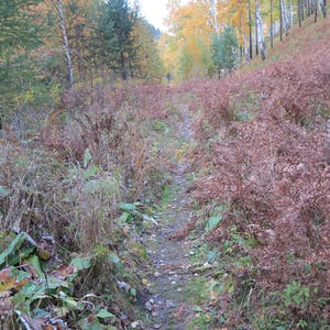 View enlargement of Red shrubs flank the trail.