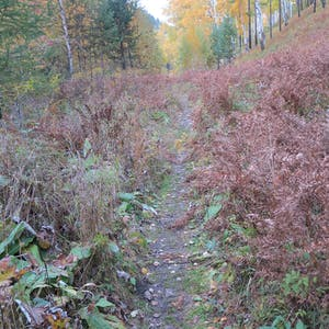 Red shrubs flank the trail.