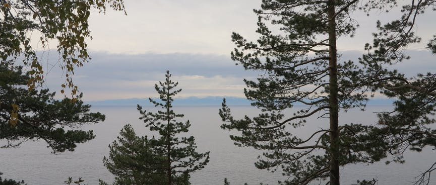 A distant land mass as viewed through the trees.