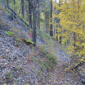 View enlargement of A steep hillside is covered with stones and a few trees.