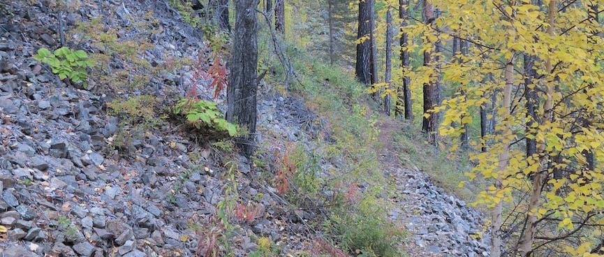 A steep hillside is covered with stones and a few trees.