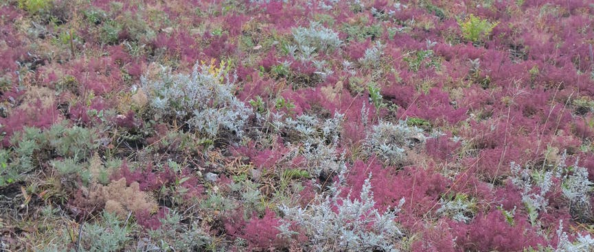 Red shrubs run up the hillside.