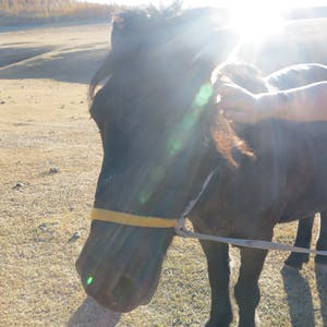 Pet horse.