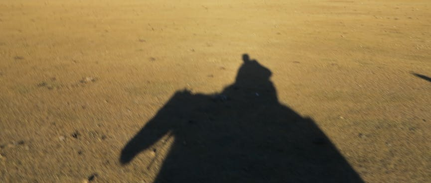 Silhouette of a horse on sand.