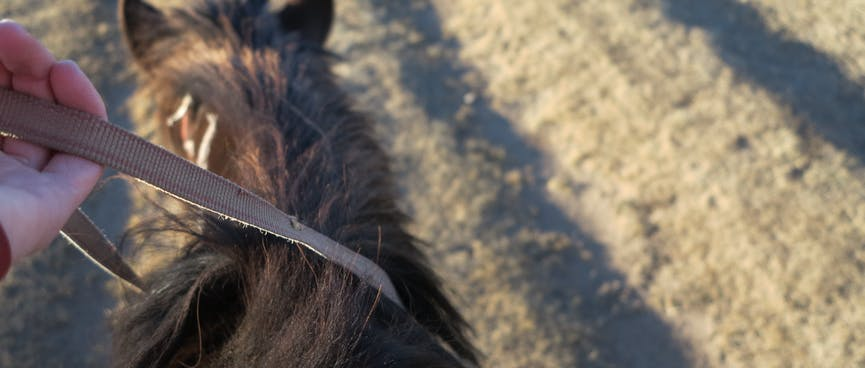 A hand loosely holds a moving horse's reins.
