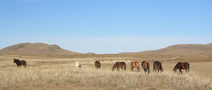 A black horse stands away from a group of brown and white horses.