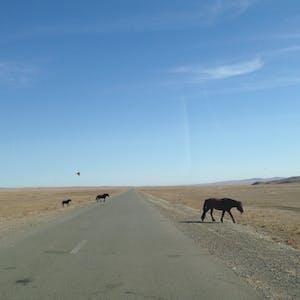 Horses cross.