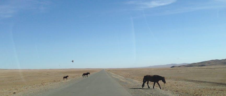 Three horses cross the highway.