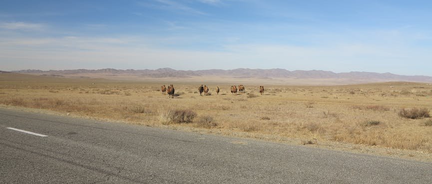 A small caravan of camels recede into the distance.